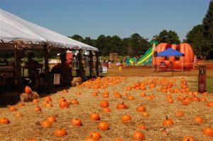 boone-hall-pumpkin-patch