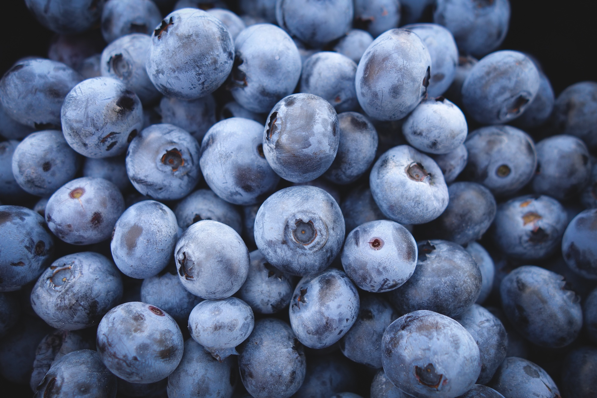 What to plant in March - blueberries