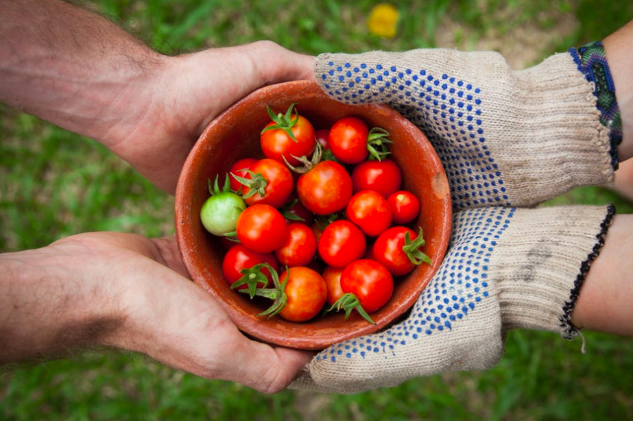 What to plant in March - tomatoes