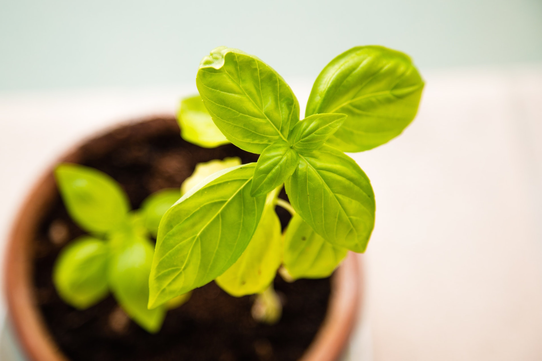 Crescent Homes Fall Gardening Tips: Move Herbs Indoors